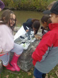 children examining samples under microscopes