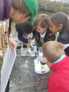 children examining samples under microscopes