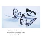 haiku and butterflies