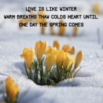 haiku over background of flowers poking out through snow